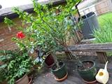 lots of beautiful large plants