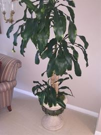 INDOOR LIVE PLANT--HOME DECOR'