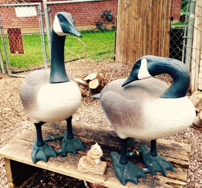 Pair Canadian Geese, no muss no fuss