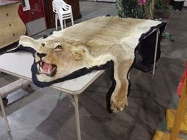 Lion skin rug can only be sold to a North Carolina resident as stated by the NC Fish and Wildlife agency.
