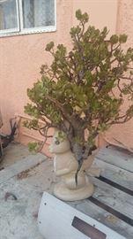 SAT. $3 PLANT