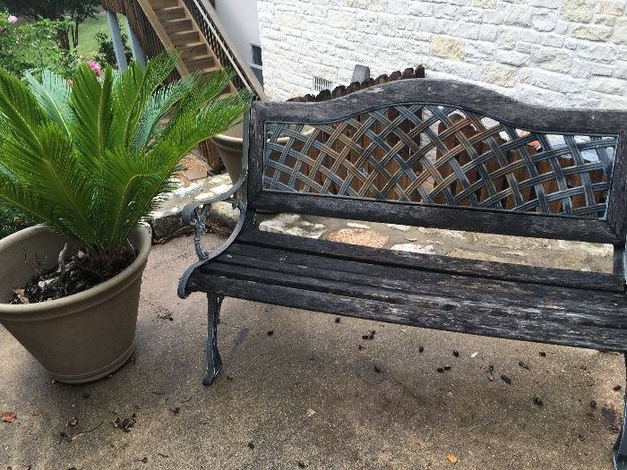 Outdoor bench, palm tree