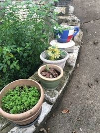 Lots of pots and plants!