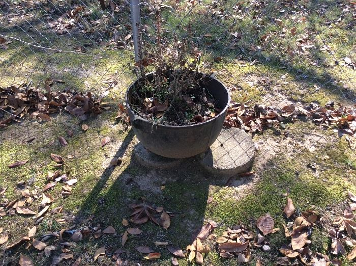 old kettle used as flower pot, stones