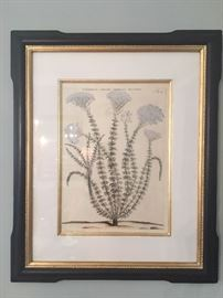 """Botanical print in a Trowbridge frame. Framed dimensions are 21.25"""" wide by 25.50"""" tall. SOLD!"""