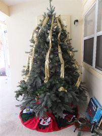 large tree on lanai
