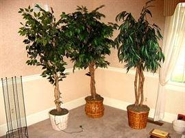 Silk trees.