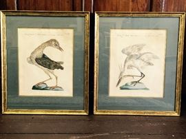 Antique Bird Prints C.1800    $625 for the pair  25%off: $469