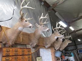 Impressive Buck Mounts