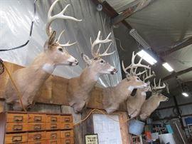 Impressive Buck Mounts