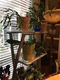 Metal and glass etagere with cactus plants