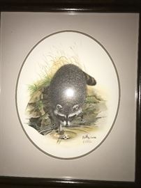 DON BALKE SIGNED LITHO -RACCOON PICTURE