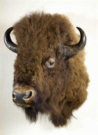 lot #35 - European Bison