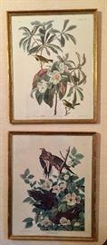 "Pair of Audubon Prints in Gilt Frames (17"" x 21"")"