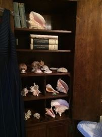 Shells and other sea collections
