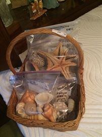 More shells, sand dollars, star fish, etc