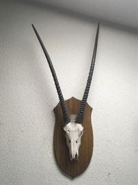 African Gemsbok skull horn mount
