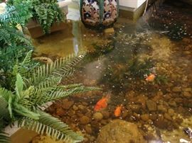 Example of fish and other lovely views of nature at Los Patios.