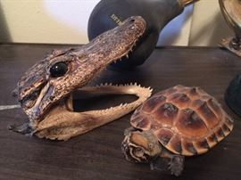 Creepy poor turtle