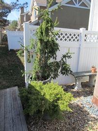 Napa Home and Garden fiberglass pots with evergreens
