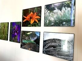 More framed original nature photographs
