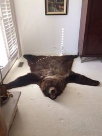 BEAR RUG APPROX 77 INCHES FROM NOSE TO TAIL