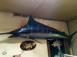 Giant Fiberglass Fish