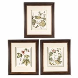 After Charles-Francois Sellier Botanical Lithographs: A set of three framed lithographs after botanical studies by French painter Charles-Francois Sellier (1830-1882). The untitled prints depict detailed drawings of indigenous plant life. Each print is matted in ivory colored linen and presented in a wood grain frame with mounting wire to the verso.