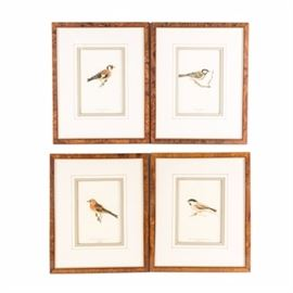 Four Aviary Offset Lithographs: A set of four framed offset lithographs depicting four bird species. The collection includes Parus Atricapillus Borealis, Carduelis Carduelis, Parus Major, and Fringilla Montifringilla. Each print is double matted and presented in a wood frame with faux burlwood veneering and mounting hardware to the verso.