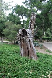 ANCIENT TREE TRUNK HAND CARVED...  TO OWN THIS YOU HAVE TO BUY THE PROPERTY.
