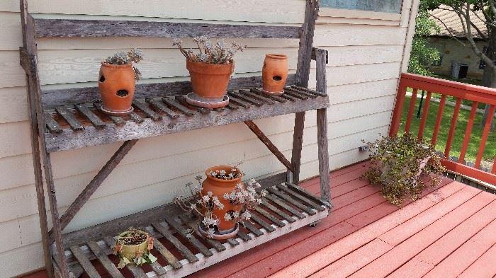 Plants and Plant Shelf