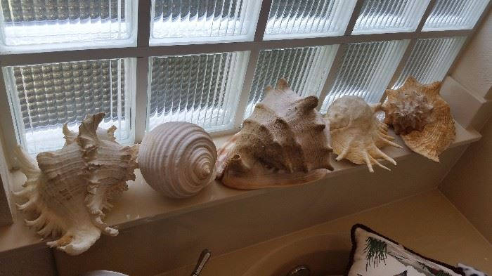 Great Sea Shells