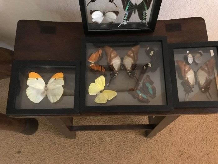 Preserved Butterfly Collection