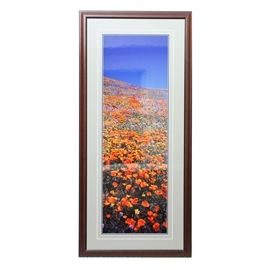 Signed Photograph by Thomas D. Mangelsen: A framed and signed photograph by D. Mangelsen. This piece depicts a filed of colorful flowers against a blue sky. It is matted and housed in a wooden frame.