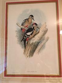 Period Gould Print