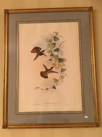 Period Gould Hummingbird Print