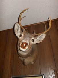 One of several deer mounts/we also have numerous horns