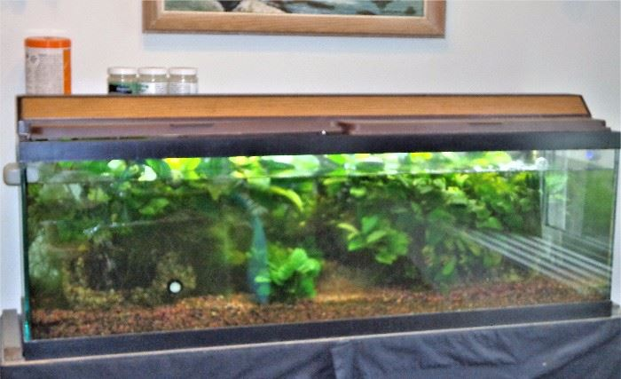 40 Gal. Fish Tank/Aquarium