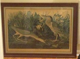 http://www.ebay.com/itm/Audubon-XLarge-Framed-Print-Your-shipper-or-Local-Pickup-RM013-/122607197205