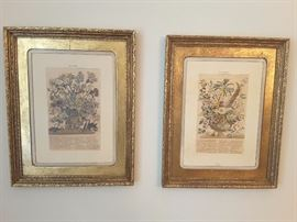 Decorative Pictures in beautiful gold-like frames