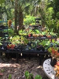 Tons of cool exotic and rare botanical plants  see description