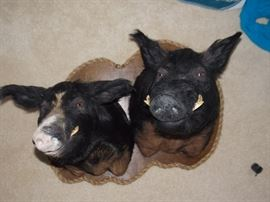 BOAR MOUNTS