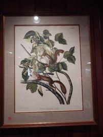 "Artist: Post John James Audubon, ""Hudson's Bay Squirrel Chickaree Squirrel"", Hand Colored Lithograph by J. T. Bowen"