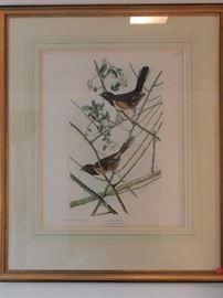Artist: Post John James Audubon -J. Bien Edition, Towhee Bunting, Chromolithograph