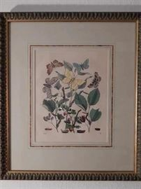 Botanical with moths, Lithograph