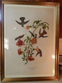 "Artist: Post John James Audubon-J. Bien Edition, N.Y., ""Mango Humming Bird"" 1860, Chromolithograph"