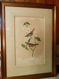 "Artist: John James Audubon-J.Bien Edition, N.Y., ""White Throated Sparrow"", Chromolith"