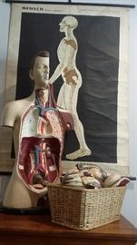 Old German Homo Sapien Wall Chart and Vintage Human Anatomy Model with Parts