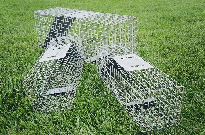 Raccoon and Squirrel Traps