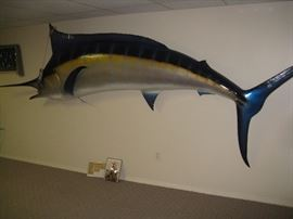 620 LB MARLIN caught by the owner of the estate over 13' long